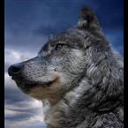 Radio Wolf Mexico