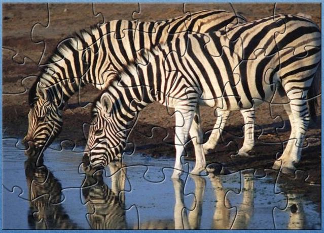 Zebra Design Softwares Free Download Freewares